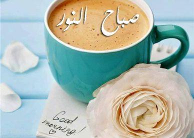 صور فيس بوك صباح النور-صور صباح الخير وصور أحلى صباح