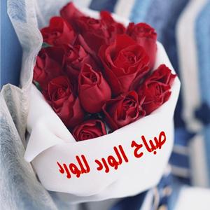 صباح الورد للورد صور وكلمات صباح الخير حبيبتي