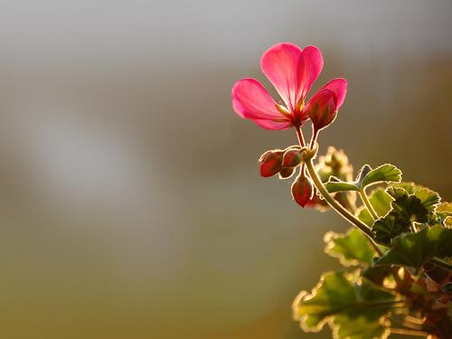 خلفيات للتصميم ساده صور صباح الخير صباح الورد صباح الحب رسائل